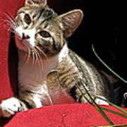 Cat On Red Art Print