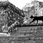 Cat On Slate Roof Art Print