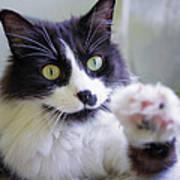 Cat Reaches For Camera Art Print