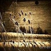 Cat Tails And Hay Rolls Art Print