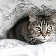 Cat Under In Blankets Art Print