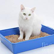 Cat Using Litter Tray Art Print