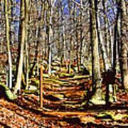 Catoctin Trail Art Print