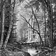 Catskill Brook, 1873 Art Print
