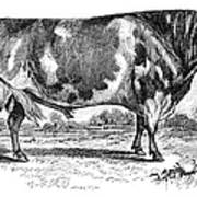 Cattle, 1867 Art Print
