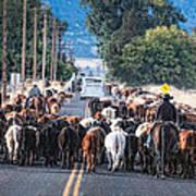 Cattle Drive 3 Art Print