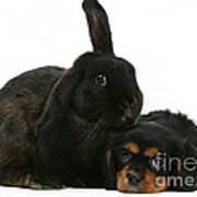 Cavalier King Charles Spaniel And Rabbit Art Print