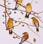 Cedar Waxwing Flock Art Print