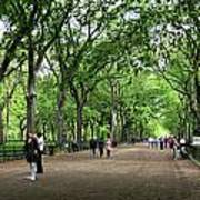 Central Park Arbor Walk Spring Art Print