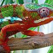 Chameleon Close Up Art Print