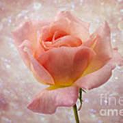 Champagne Rose. Art Print