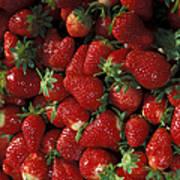 Chandler Strawberries Art Print
