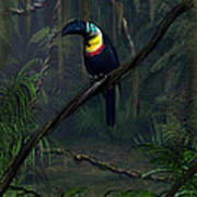 Channel Billed Toucan Art Print