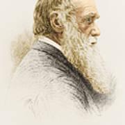 Charles Robert Darwin, English Art Print