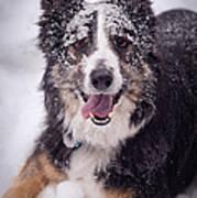 Chasing The Snow Art Print by Joye Ardyn Durham