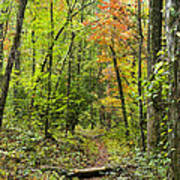 Chatooga Forest Trail Art Print