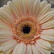 Cheeriest Flower Art Print
