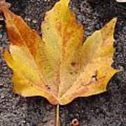 Cheerio Leaf Art Print