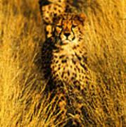 Cheetah Cubs Art Print