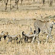 Cheetah Mother And Cubs Art Print