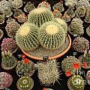 Chelsea Flower Show Cacti Display Art Print