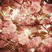 Cherry Blossom Sky Print by Amy Tyler