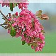 Cherry Blossom Spring Photoart Art Print