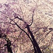 Cherry Blossoms - New York City Print by Vivienne Gucwa