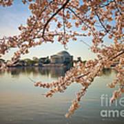 Cherry Blossoms And Jefferson Memorial Art Print