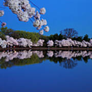 Cherry Blossoms And The Tidal Basin Art Print