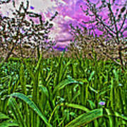 Cherry Orchard After The Storm Art Print