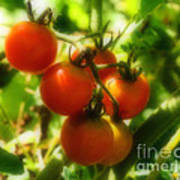 Cherry Tomatoes On The Vine Art Print