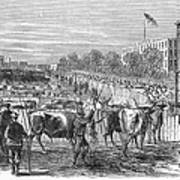 Chicago: Cattle Market Art Print
