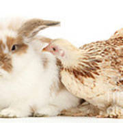 Chicken And Rabbit Art Print