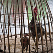 Chickens In Bamboo Cage Art Print