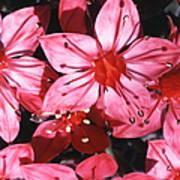 Chihuahua Flower Art Print