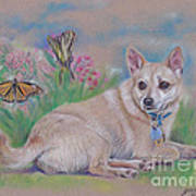 Chihuahua With Butterflies  Art Print