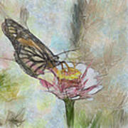 Chinese Butterfly Art Print