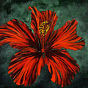 Chinese Rosa Art Print