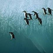 Chinstrap Penguin Pygoscelis Antarctica Art Print