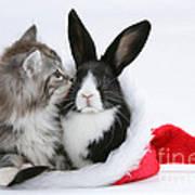 Christmas Kitten And Rabbit Art Print
