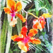 Chromaticorchids Art Print by Anthony Caruso