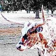 Cibolo Ranch Steer Art Print