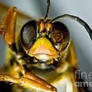 Cicada Killer Art Print