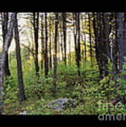 Cinematic Style Back Woods At Sunset Art Print