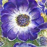 Cineraria Of South Africa  Art Print