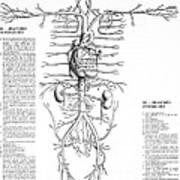 Circulatory System, 16th Century Art Print