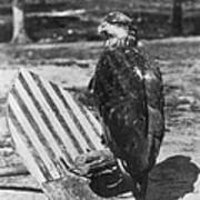 Civil War: Eagle Mascot Art Print