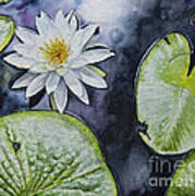 Clearwater Lilly Art Print