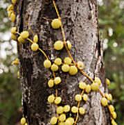 Climbing Plant On A Tree Trunk Art Print